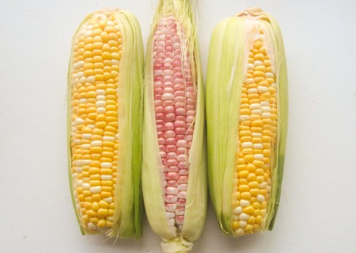 Red and Yellow Corn on the Cob